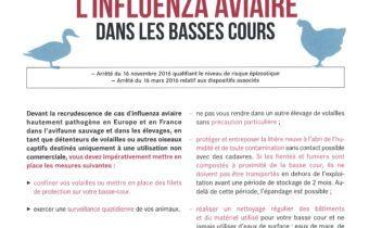 influenza-aviaire